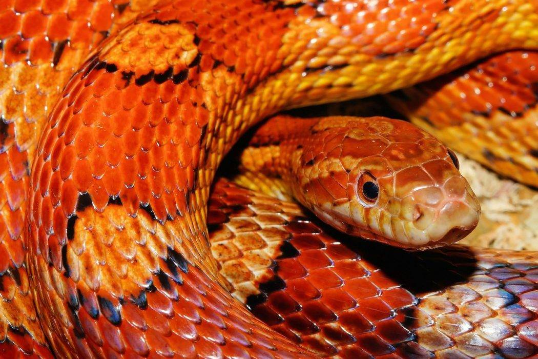 flash fiction - snakes